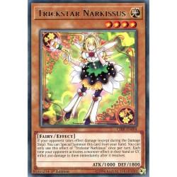 CIBR-EN004 Narcibise Farstar /Trickstar Narkissus
