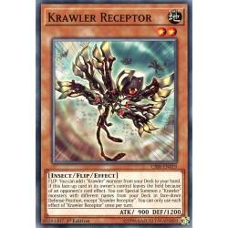 CIBR-EN019 Récepteur Krawler /Krawler Receptor