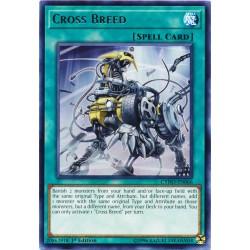 CYHO-EN066 Cross Breed