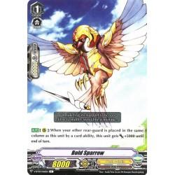 CFV V-BT03/061EN C Bold Sparrow
